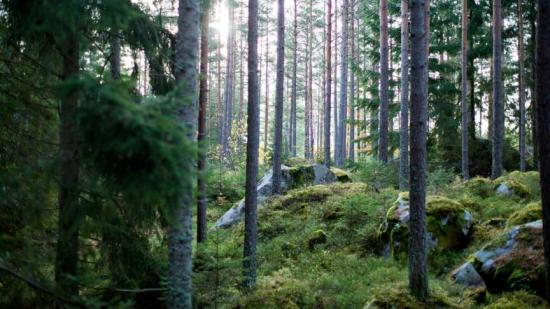 Bland skog, berg och sjöar ska ett nytt bostadsområde växa fram.