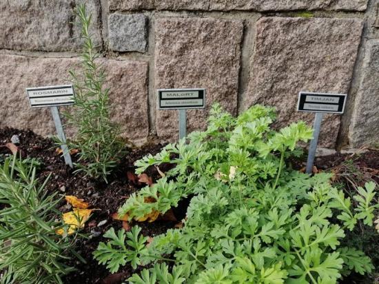 Efter renoveringen finns kryddträdgård, bärbuskar och 100 smultronplantor som alla kan äta av.