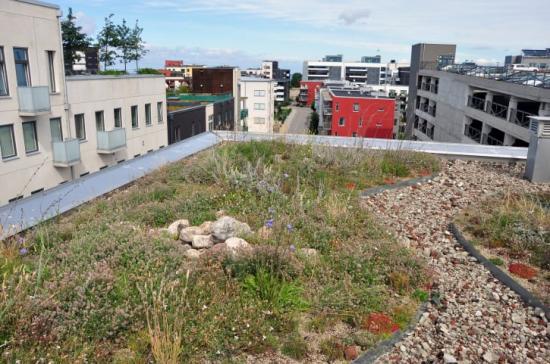 Vegetation på tak, s.k. gröna tak, är ett sätt att hantera dagvatten direkt där det faller, samtidigt som man kan få andra ekosystemtjänster såsom biologisk mångfald.