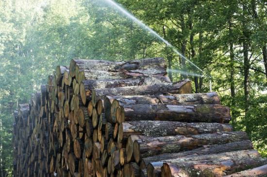 Auktorisationen för golvleverantörer har krav på social och miljömässig hållbarhet i hela kedjan. Kährs, som nyligen godkändes som Auktoriserat Golvföretag, har väl utvecklade system för handel med trä.